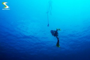 AIDA free diving course sss phuket